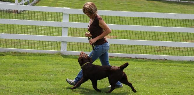 Dog Training Belfast Maine