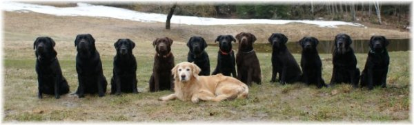 Midcoast Maine Dog Training